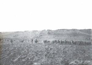 Colonne Andréa traversant un troupeau