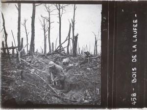 Verdun : bois de la Laufée